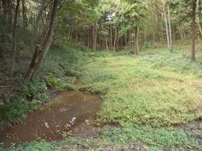 トトロの森湿地帯2