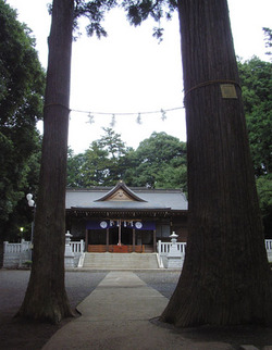 豊鹿島神社神木